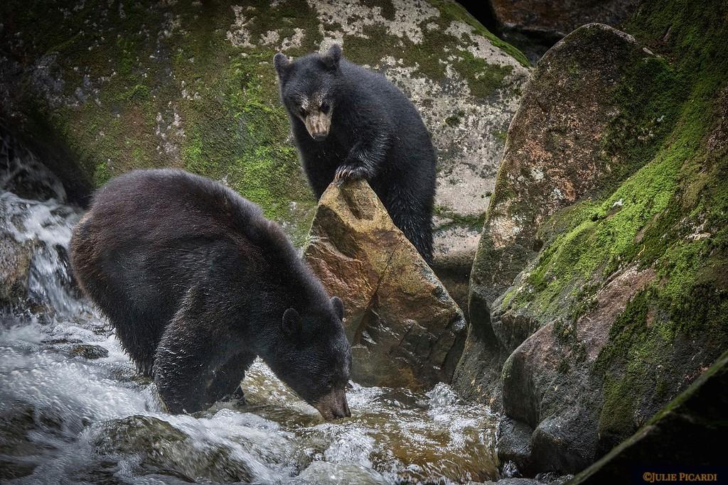 Baby bear looks on....