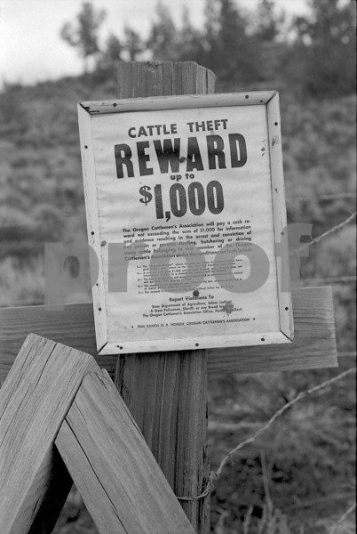A $1,000 reward sign for cattle theft is nailed to a fence post in eastern Oregon.