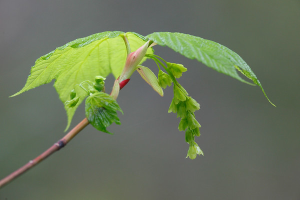 Nature Close-ups