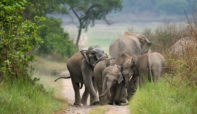 Playful-jostling-elephants-corbett.jpg