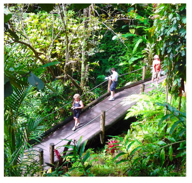 Boardwalk at the Hawaii Tropical Botanical Gardens
