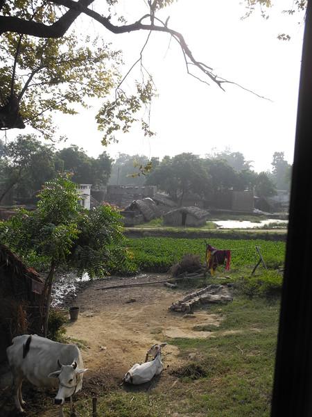 india2011 783.jpg