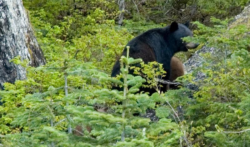 Bears_5.jpg