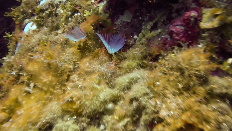 2019-11-15-18 Jamaica Dive Photos-untitled (13 of 115)-1-007.jpg
