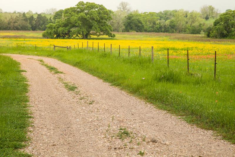2015_4_3 Texas Wildflowers-7558-2.jpg
