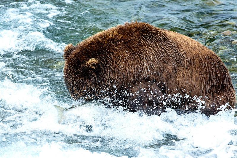 Alaska_2013_FH0T8952.jpg