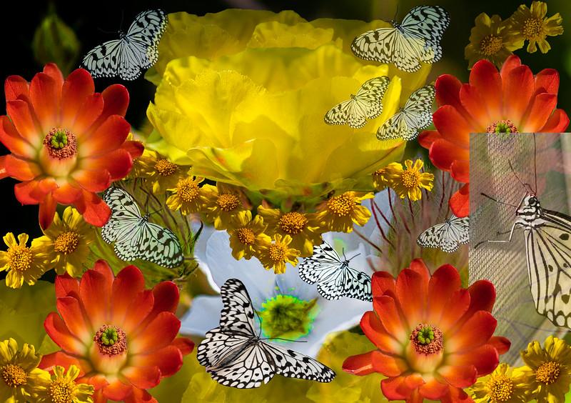 Whiteflowercollage-24-Edit.jpg