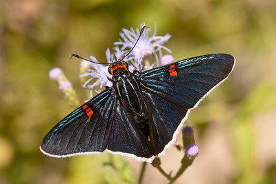 Texas Butterflies and Other Insects