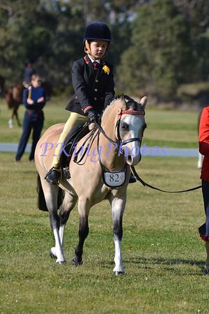 Show Horse Council