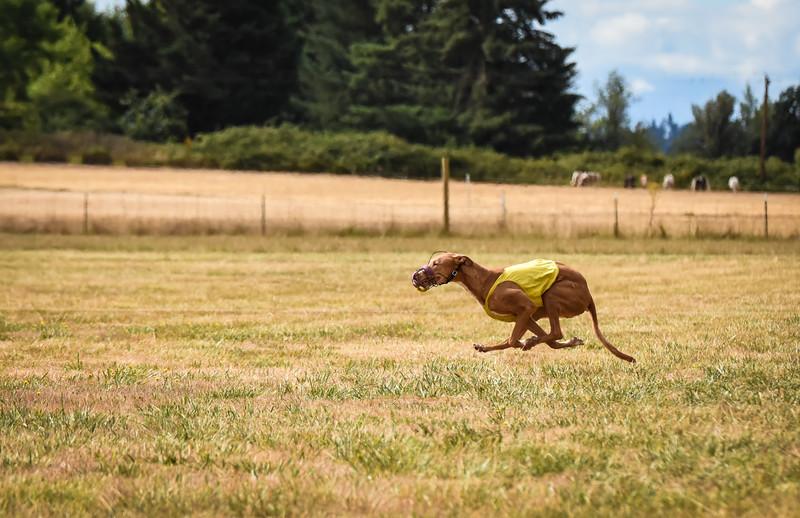 pharoahhound-2.jpg