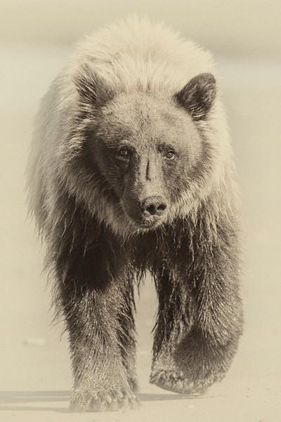 Bear Fine Art.jpg