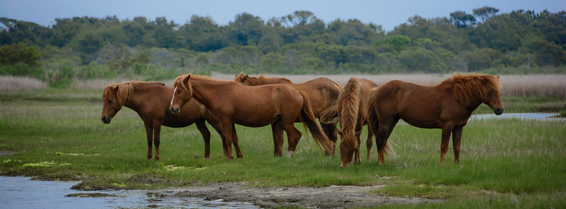 Assateague-3-237-ng.jpg