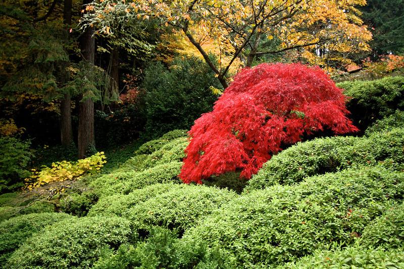 Portland Japanese Garden  11-11-11  3561.jpg