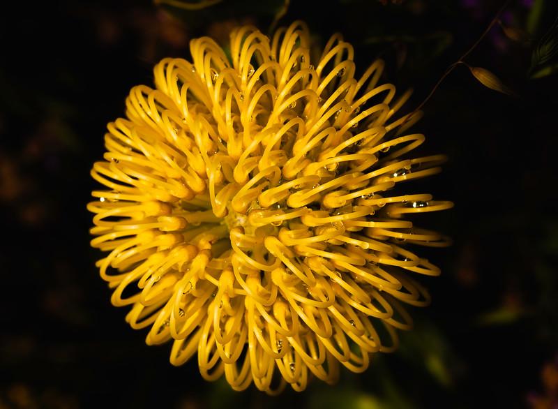 Flower 2, U. C. Santa Cruz Arboretum, California, 2010