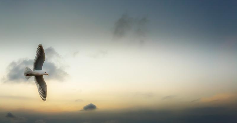 0621 Gull Sky_MASTER-2.jpg