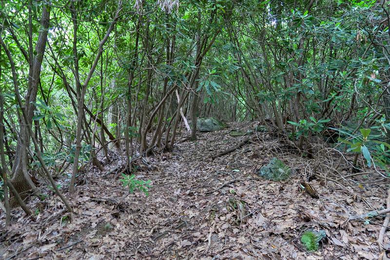 Green Mountain Trail -- 3,700'