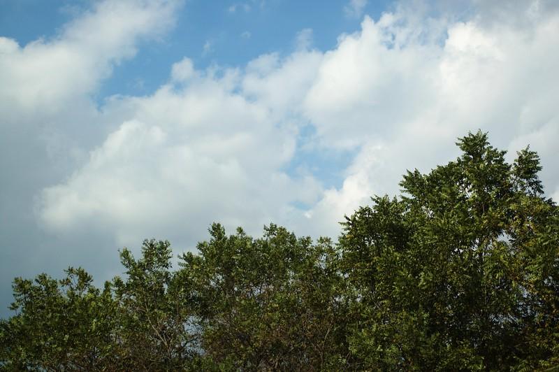 DebsPark036-TreesAndClouds-2006-10-06.jpg
