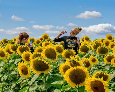 9/10/17 Sunflowers