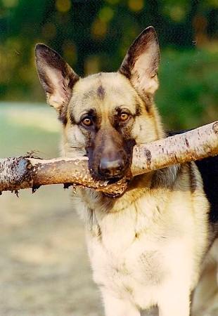 2012-11-26 Dogs 31.jpg
