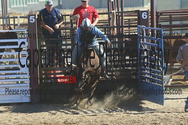 Sunday Rodeo
