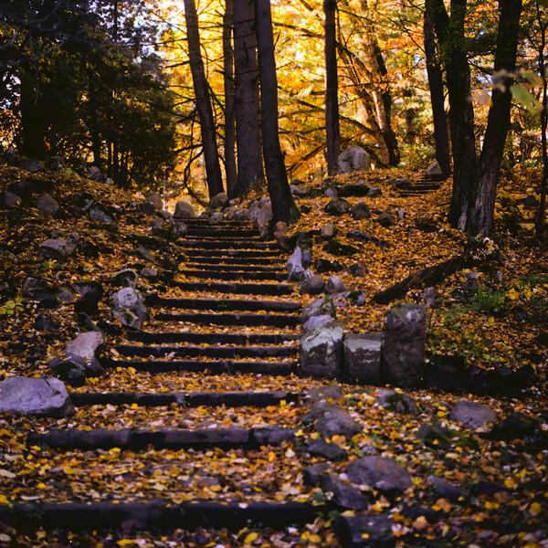 Autumn Hike 120 Film-00016.jpg
