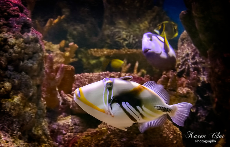 Makeup Fish sm.jpg