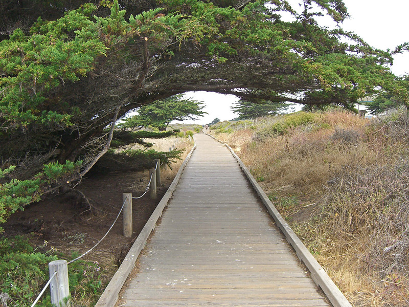 Boardwalk above and along Moonstone Beach