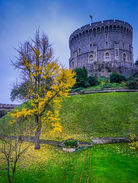 Windsor Castle tree
