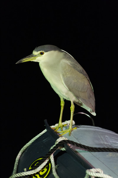 Bird standing on motorboat - Mexico