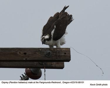 Osprey M89101.jpg