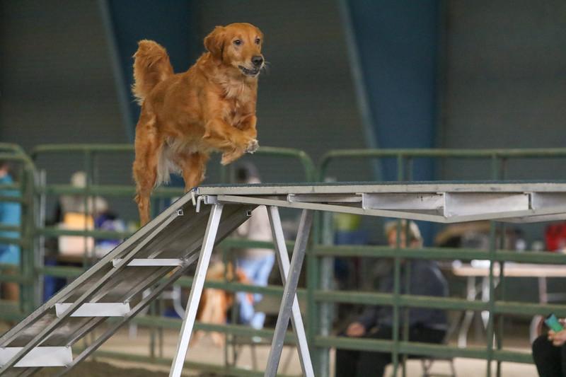 3-10-2019 Bloodhound-0267.jpg