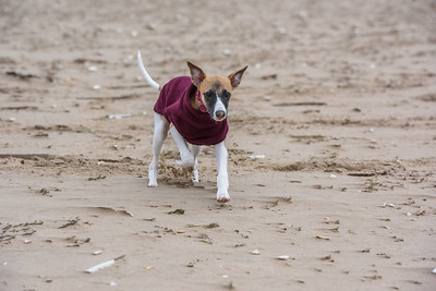 Tilly first trip to the beach 01/12/2018