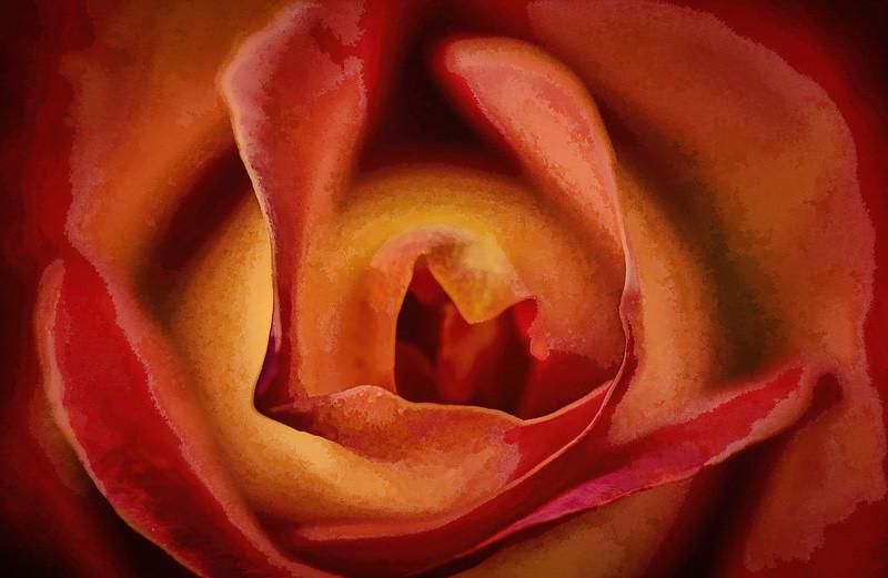 June 14 - Spring Rose.jpg