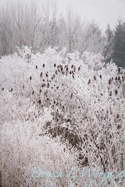 Winter frost_9310.jpg