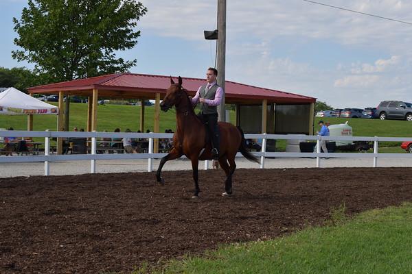 29. Academy Horsemanship WTC Adult