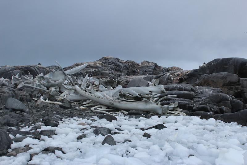 Antarctica 296.JPG