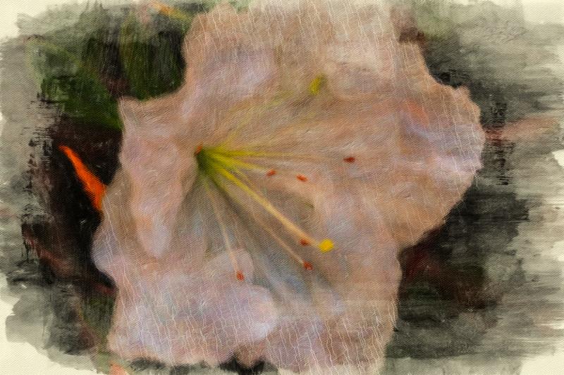 January 16 - Flower-1.jpg