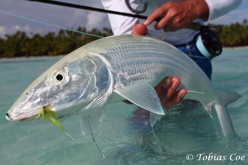 Tahiti (Anaa) (57).JPG