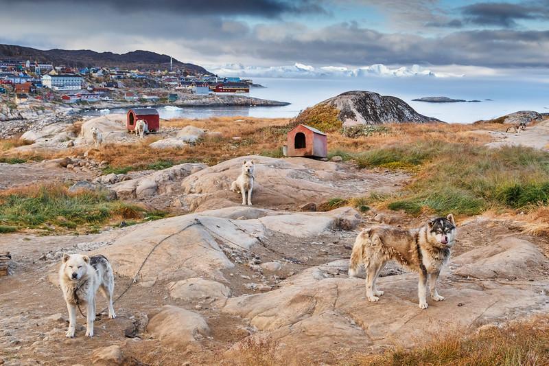 _MG_7420_Ilulissat_Dogs.jpg