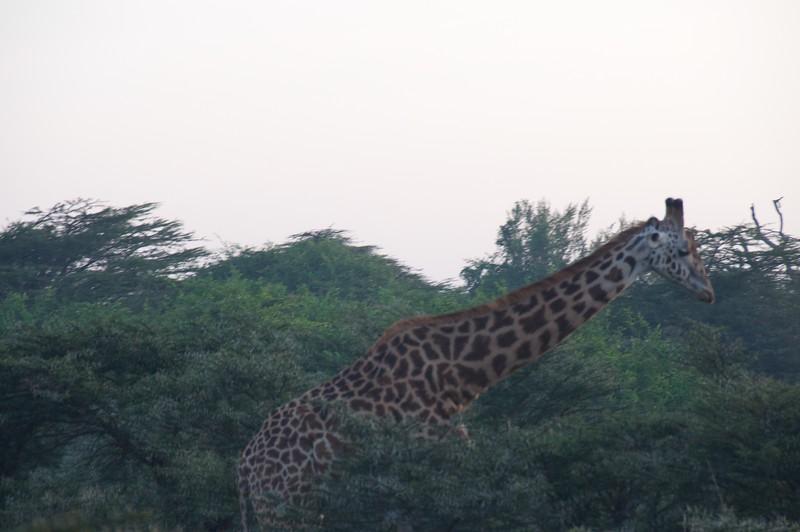 Kenya.Card1.02.2014 517