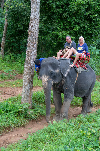 Elephant trekking in the jungle - Nosey Parker Elephant Camp - January, 2018