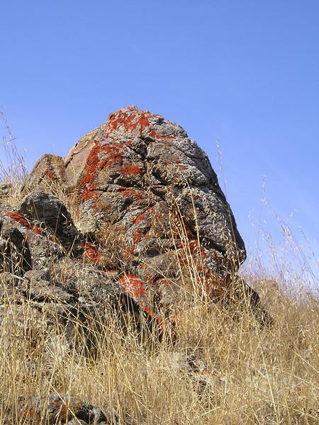 Couldn't resist more lichen-rock shots.