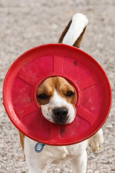 Frisbee Crown