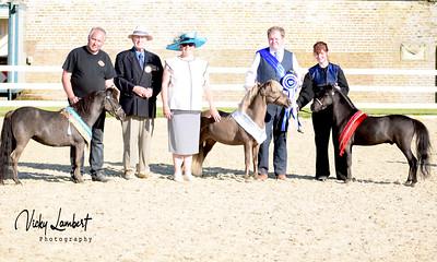 The Royals Miniature Horse & Shetland Pony Show