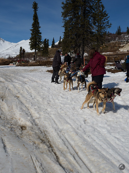 20190326_alaska_trip_alpine_creek_lodge_3501.jpg