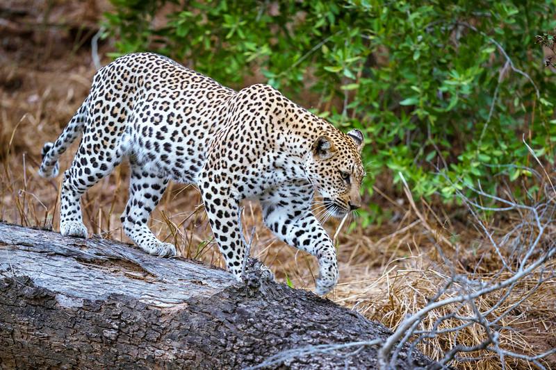 LeopardHills-20191029-2213.jpg