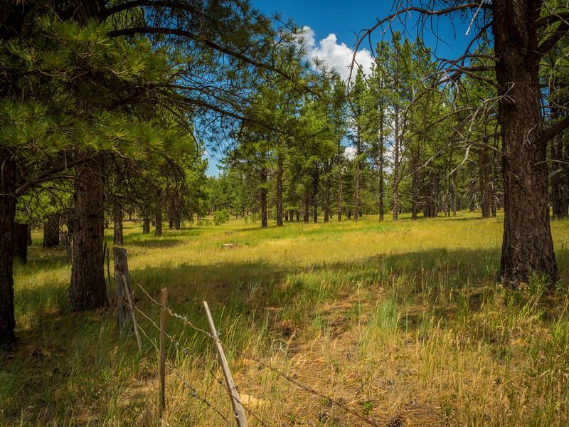 Jacob Lake. Arizona Area