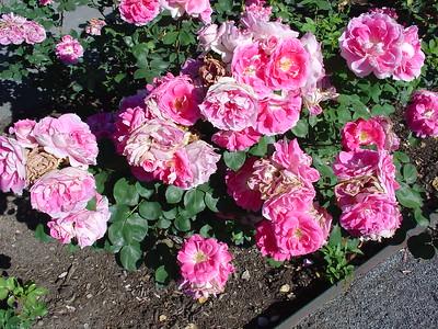 Botanical Garden 6.12.2004