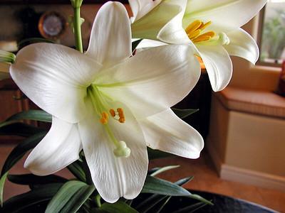 Ice Plant-Nigella Damascena