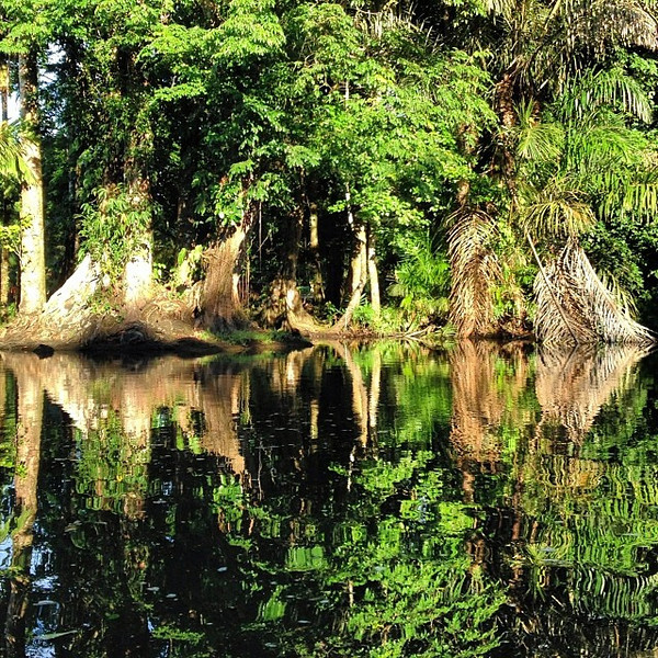 Jungle-licious symmetry in the Tortuguero canals. Looks something of art, simply Mother Nature. Costa Rica #puravida